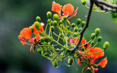 Gardens springing to life…